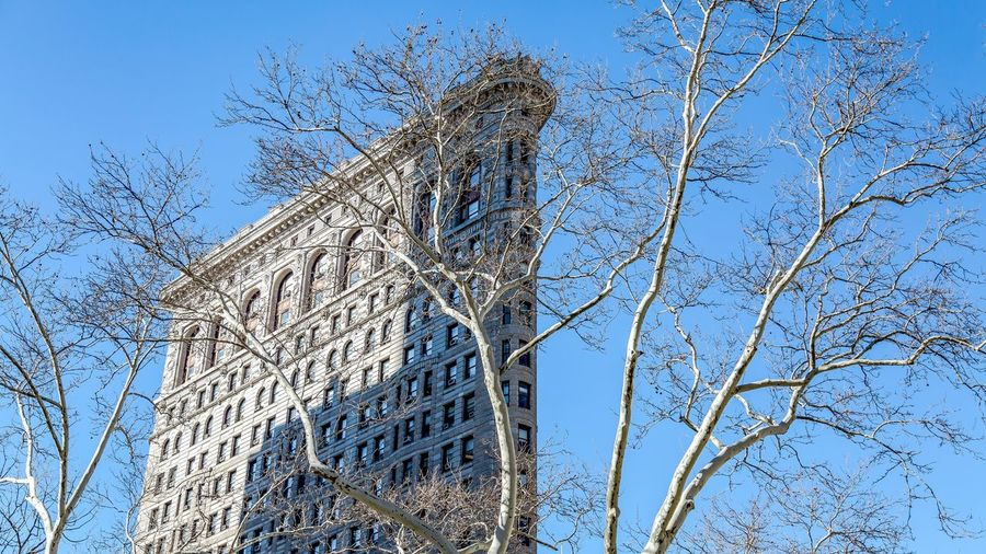 Flatiron Low Angle View Sky Plant Tree No People Nature Day Clear Sky Backgrounds