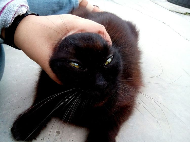 Pet Portraits EyeEm Selects Pets Close-up Black Cat Black Cat Photography Portrait