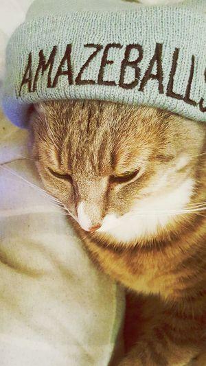 Catlife Cat