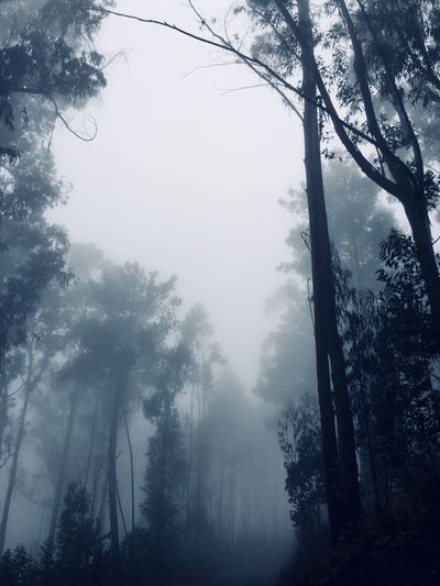 The fog Madeira Island Portugal Tree Plant Fog Beauty In Nature Sky Tranquility No People Forest Nature Scenics - Nature Outdoors Day The Traveler - 2018 EyeEm Awards The Great Outdoors - 2018 EyeEm Awards