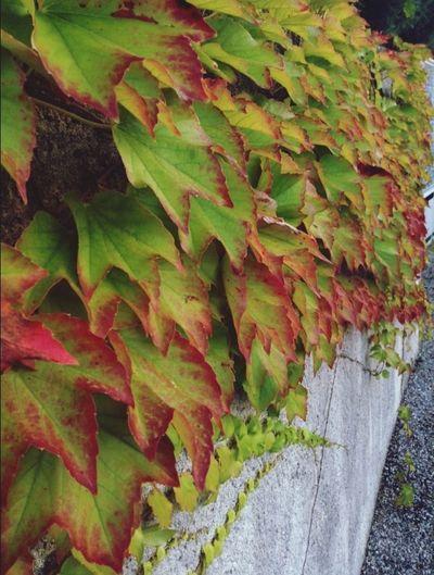 Flowers,Plants & Garden Colors Green Nature