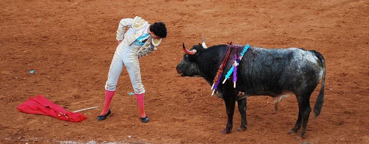Toros Taking Photos Travelling Laredo