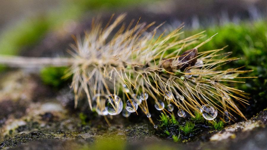 Closeup of Dew