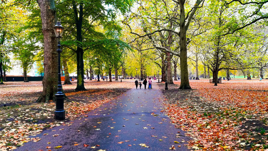 Tree Day Leaf Outdoors Park - Man Made Space Real People Beauty In Nature People Autumn Sky Travel LONDON❤ London Huawei United Kingdom London Lifestyle St James Park  St James's Park EyeEm Best Shots Europe Trip EyeEm Nature Lover EyeEmNewHere EyeEm Best Shots - Nature EyeEm Selects