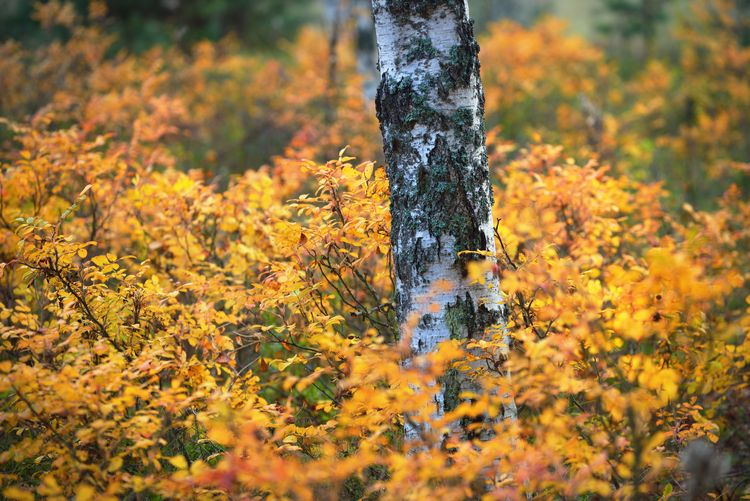 Yellow flowering tree on field during autumn