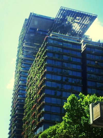 Architecture_collection Nature Taking Over On Purpose Sydney, Australia