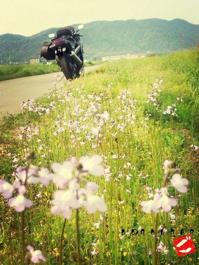 Enjoying The Sun Kawasaki