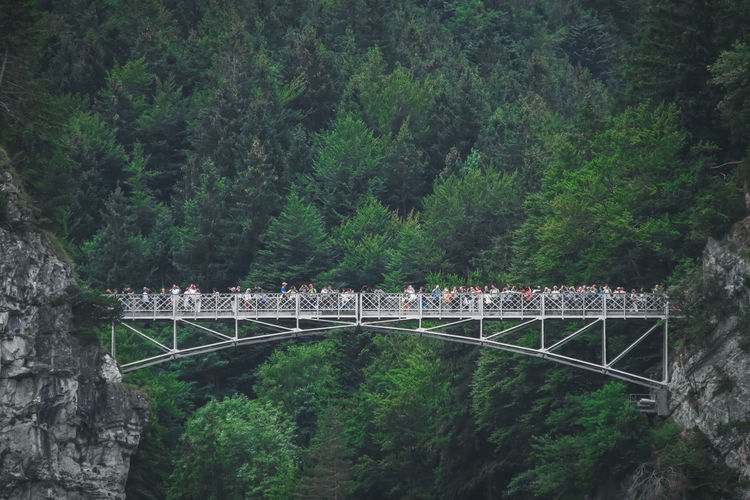 Bridge over river amidst trees in forest