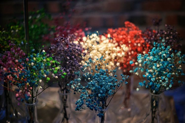 colllorful dry-flowers Colorful Flowers EyeEm Selects Tree Flower Illuminated Multi Colored City Close-up Plant Flower Head