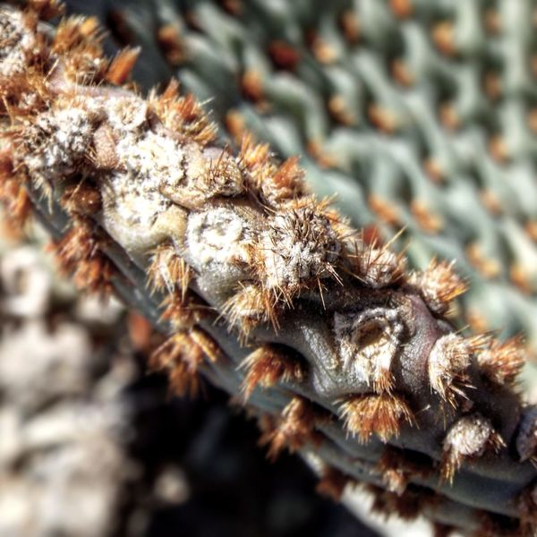 Close-up No People Nature Fragility EyeEm Nature Lover Desert Landscape Travel Destinations Mountain Range Desert Landscape Fall Beauty Freshness Scenics Outdoors Growth Prickly Nopales Cactus Ouch!!