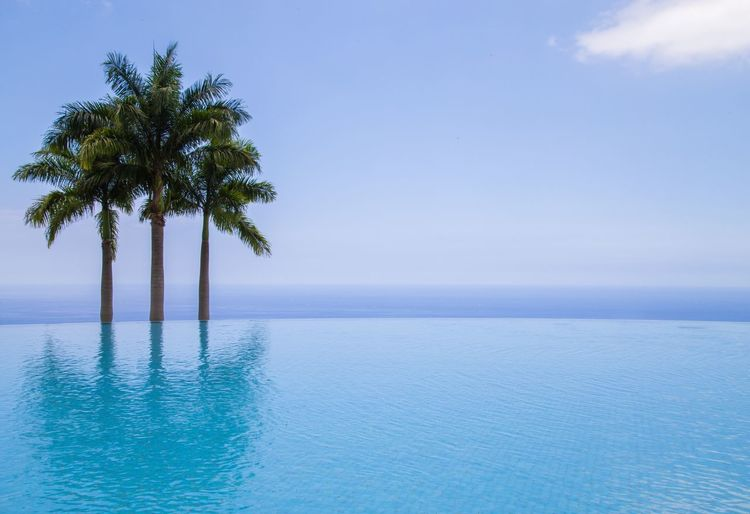 Palm trees and infinity pool against sky
