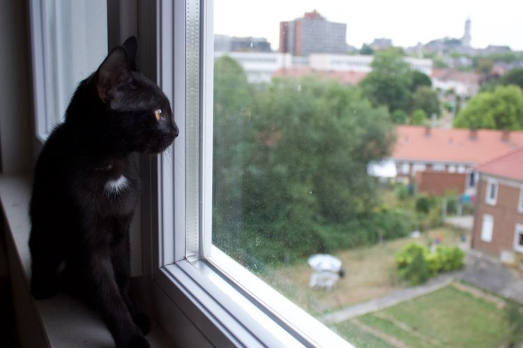 Cat Cats Of EyeEm Black Kitten Black Cat Staring At The World Staring Window Appartment View Domestic Animal Pets One Animal No People Day Domestic Animals Curious Sad Domestic Cat Looking Whisker