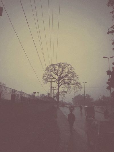 Trees-iPhone #memory Lane Roadside ###lonely