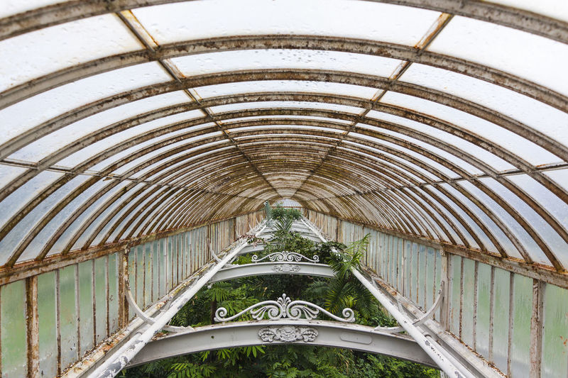 Palm house, Royal Botanic Gardens, Kew, Richmond, London, Surrey, England Arch Architecture Building Built Structure Ceiling Close-up Day Greenhouse Growing Indoors  Kew Kew Gardens Landscape Leaf Leaves Low Angle View Modern No People Palm Palm House Royal Botanic Gardens Rust Rusty Tree Trees