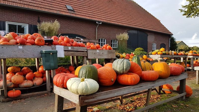 Fresh Fruit Outdoors Pumpkin Healthy Eating Market Agriculture Freshness Fresh Food Healthy Diet Healthy Food Day No People Building Exterior Food Freshness Sky Architecture