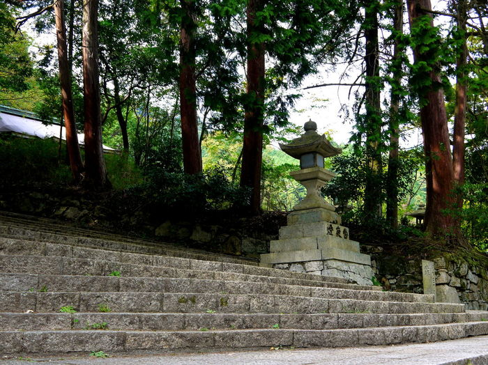 Cedar Trees Japan No People Outdoors Stone Lantern Stone Steps Tranquility Tree Trunks