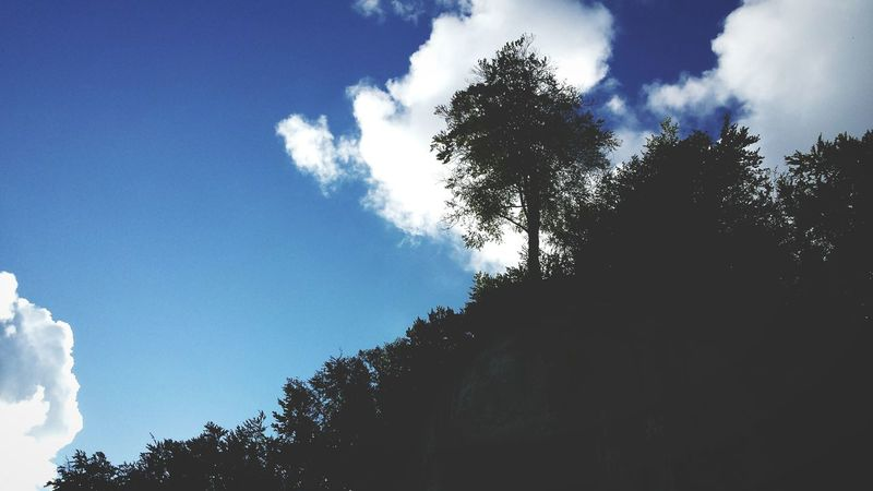 Tree Cloud - Sky Sky Low Angle View Pinaceae Nature Outdoors No People Forest Pine Tree Day Beauty In Nature