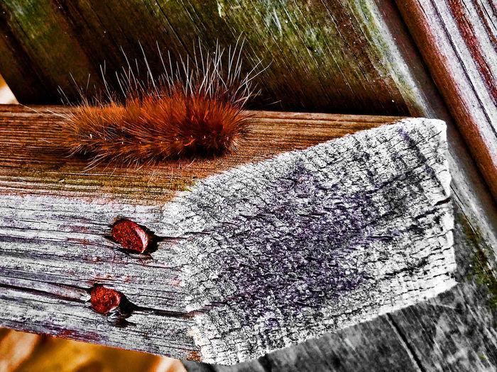 Armand Bayou Nature Center Beautiful Nature Catapiller Dont Touch Me Fuzzy Nature Rusty Nails Texas WeAreJuxt.com