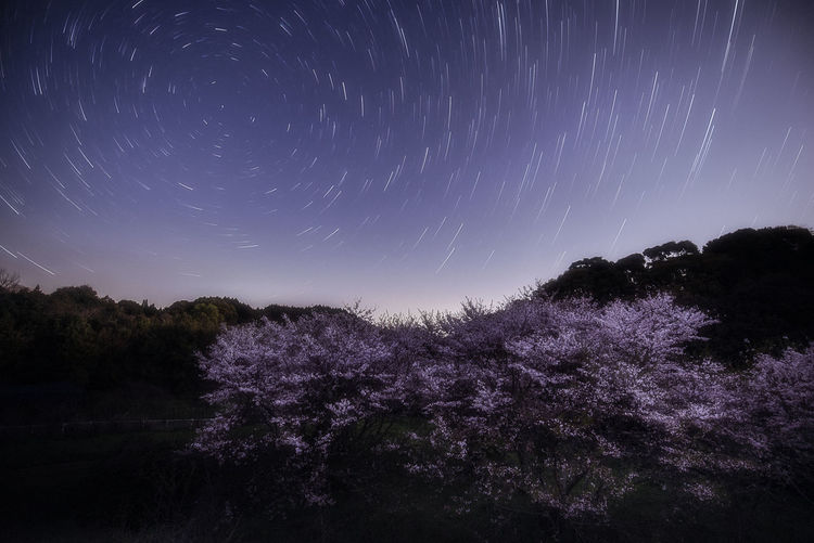 sakura Astronomy Beauty In Nature Flower Growth Low Angle View Nature Night No People Outdoors Scenics Sky Star - Space Star Trail Tranquil Scene Tranquility Tree Fresh On Market 2017