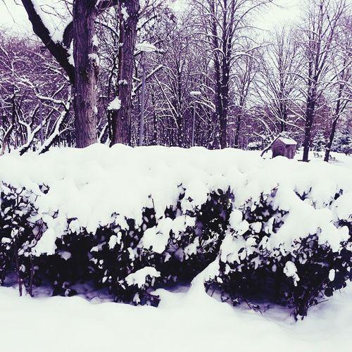 Kar Kartopu Kardanadam Kurtuluş Parkı