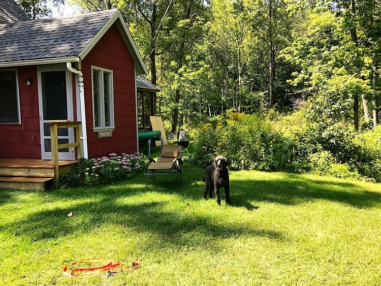 Mudge Pond Sunday Enclosedporch Barbecuegrill Outdoorfurniture Lawnchair Built Structure Outdoors Day Real People Frenchpoodle BlackDog Redcottage Cottage Countryhouse Rural Greengrass Grass Trees Woods