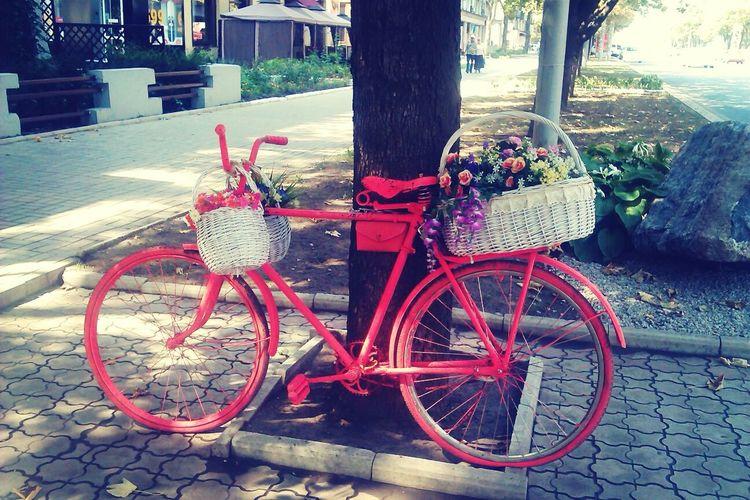 Мой любимый фиолетовый велосипед на Каффе перекрасили :/ Донецк )