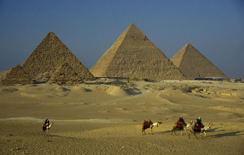 Camels walking by pyramids of giza against clear blue sky