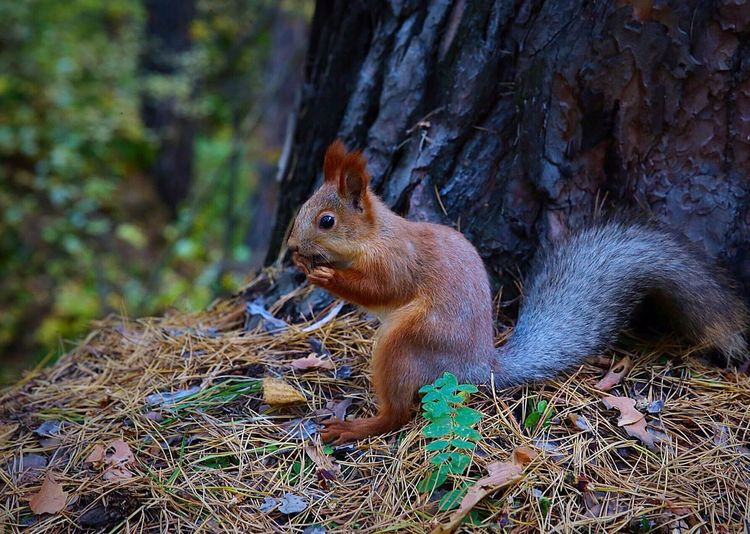 Nature Squirrel Nature_collection