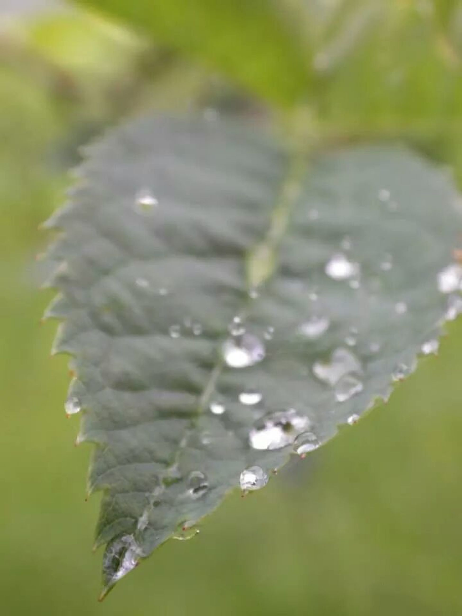 drop, water, close-up, focus on foreground, wet, nature, fragility, growth, freshness, beauty in nature, plant, selective focus, season, weather, day, green color, leaf, dew, outdoors, winter