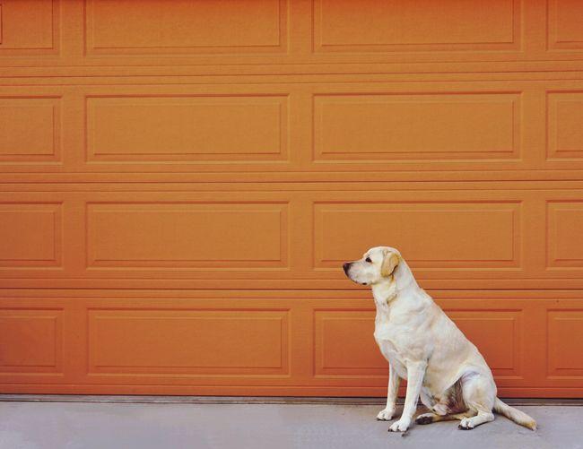 Dog Sitting Against Brick Wall