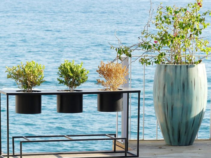 Potted plants on table by sea