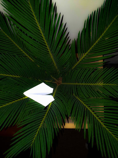 Low angle view of palm tree leaves