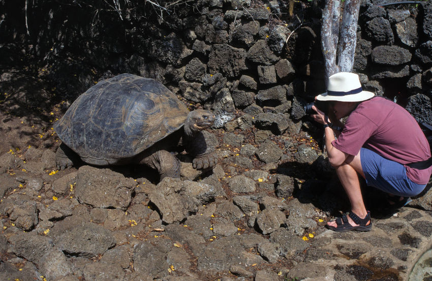 Galapagos Islands Giant Tortoise Lonesome G