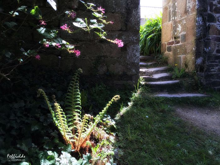 Architecture Building Exterior Tree Day Flower Outdoors No People Plant Growth Ruins Abbey Abbey Ruins Nature éclairage Sunlight Escaliers History Histoire Ambiance Fougères RAYONDESOLEIL