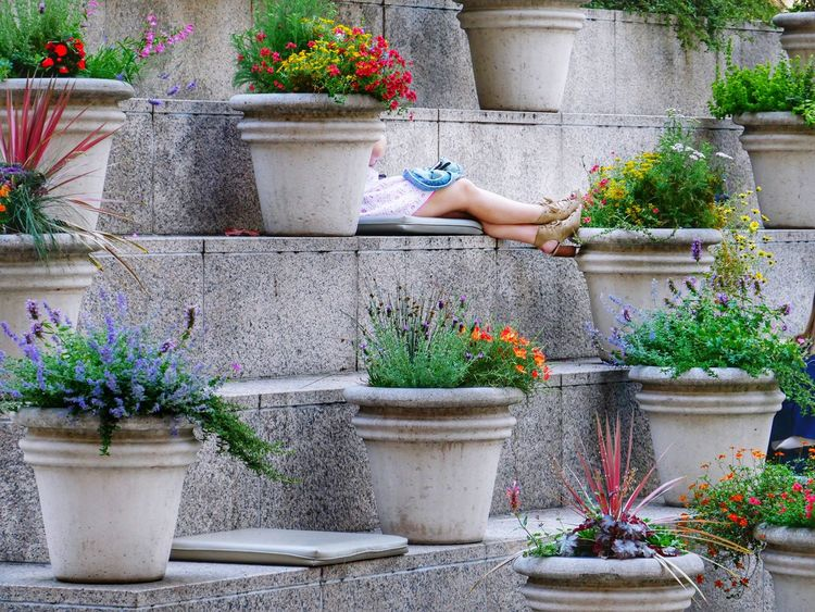 She's got legs Potted Plant One Person Woman Legs Alone Time Single City Park San Francisco Checking Phone Working Women EyeEmNewHere Breathing Space Lunch Hour Coffee Break