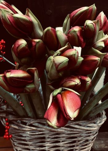 Beauty is Everywhere Freshness Basket Red Flower Still Life Close-up Wicker Large Group Of Objects Bouquet Bouquet Of Flowers Container Colors Red Warm Colors Backgrounds Decorative Petal Bloom Stem Beauty Is Everywhere  Beauty In Nature Adore Home Interior