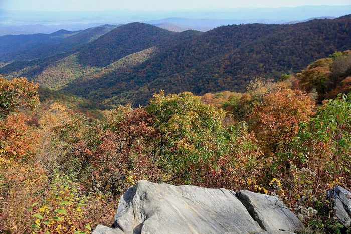 Autumn Foliage in NC Mountains Autumn Autumn Colors Autumn Leaves Beauty In Nature Blueridgemountains Colors Day Foliage Horizontal Landscape Leaves🌿 Mountain Nature No People Outdoors Rock Scenics Shadow Shadow And Light Tree