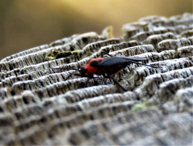 Animal Animal Themes Animal Wildlife Animals In The Wild Beetle Close-up Day Insect Invertebrate Ladybug Nature No People One Animal Outdoors Red Rock Selective Focus Textured  Vertebrate Zoology
