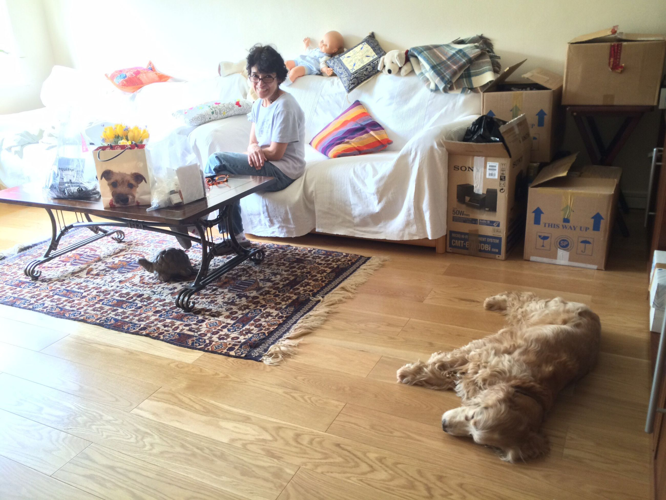 indoors, animal themes, chair, relaxation, home interior, domestic animals, table, one animal, sitting, pets, mammal, dog, flooring, lying down, sofa, resting, full length, day, no people, animal representation