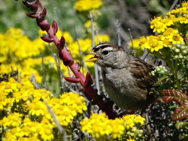 Animal Themes Animal Wildlife Animals In The Wild Beauty In Nature Bird California Day Feeding  Flower Growth Nature No People One Animal Outdoors Perching Plant Point Lobos Tree USA Yellow