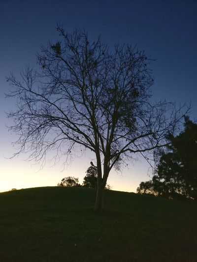 Life is leafless Let's Go. Together. Sydney Tree Summertime Winter Going