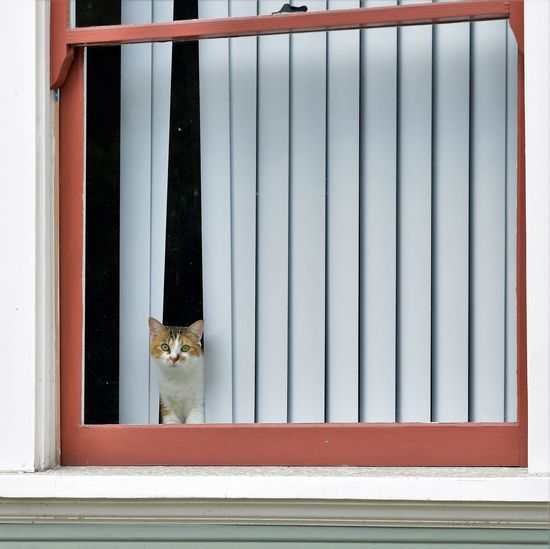 Can I help you? Pets Cat Home Is Where The Heart Is City Window Door Architecture Building Exterior Built Structure