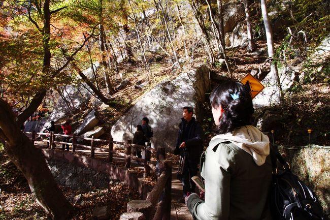 山梨県 甲府市 昇仙峡 紅葉 Japan Yamanashi Kōfu-shi Nature Forest Mountain Autumn Autumn Leaves