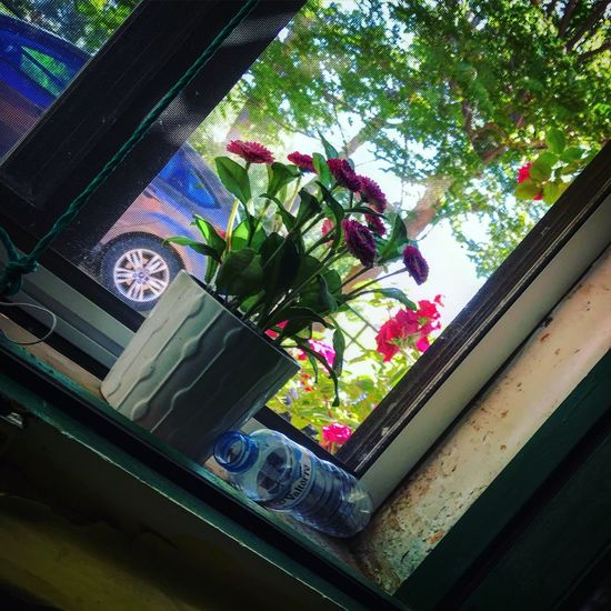 Window IPhoneography Relaxing Weekend Pueblos De España Plant Window Tree Growth No People Nature Flower Flowering Plant Reflection Architecture Glass - Material Transparent Beauty In Nature Green Color Decoration Outdoors