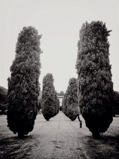 Villa Entrance ~ Lucca, Italy 2013 Trees Cypress Italy Traveling