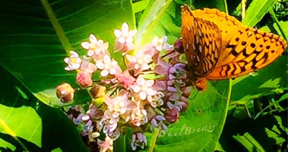 Natural womon 🍃🍂✨ Taking Photos Summer2015 StreamzooVille Flowerpower My Love Life Truth. EyeEm Nature Lover Mother Earth
