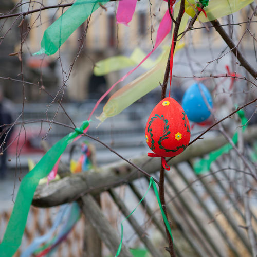 Decorations Tied On Plant Stems During Easter