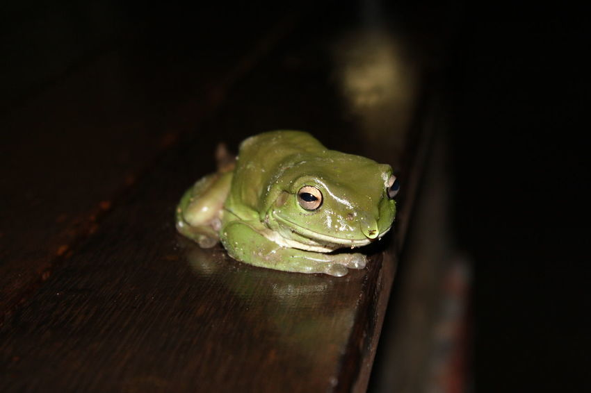Animal Animal Themes Animal Wildlife Animals In The Wild Close-up Frog Green Color Large Group Of Objects Nature No People One Animal Portrait Water Droplets