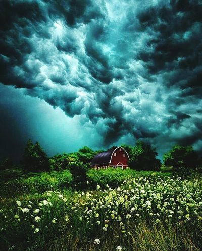 Nature Cloud - Sky Field Outdoors Tree Green Color Agriculture