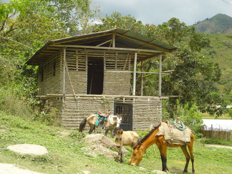 Arquitecture Horses Moments Vida Bahareque House Campesino Colombia ♥  Escena Rural Escena Tranquila Simple Beauty